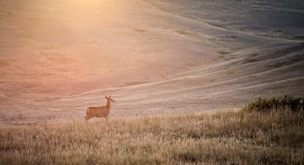 Golden Montana Sunset