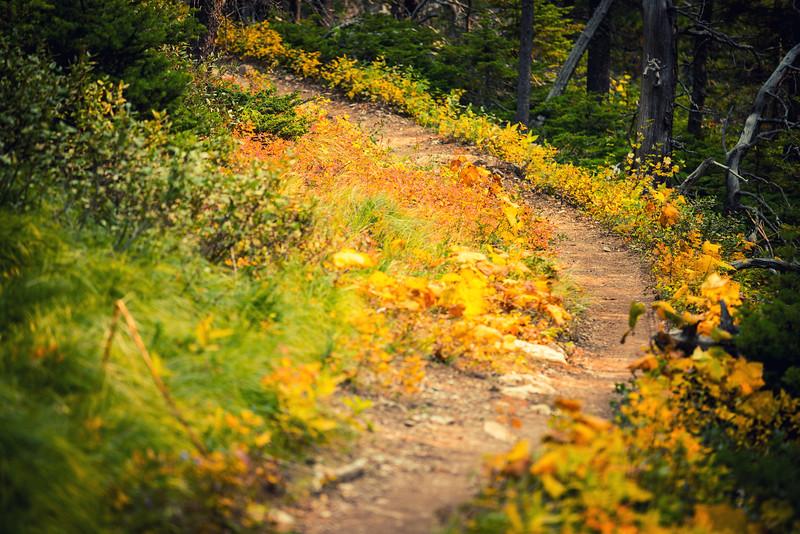 Glacier National Park Fall Colours
