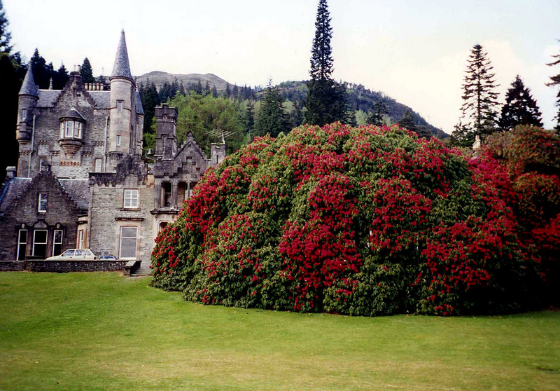 Benmore Lodge and a giant rhododenron bush