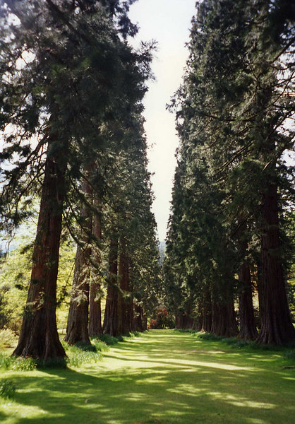 The avenue of Sierra Redwoods planted by Piers Patrick in 1863 and form a most spectacular entrance to the gardens .