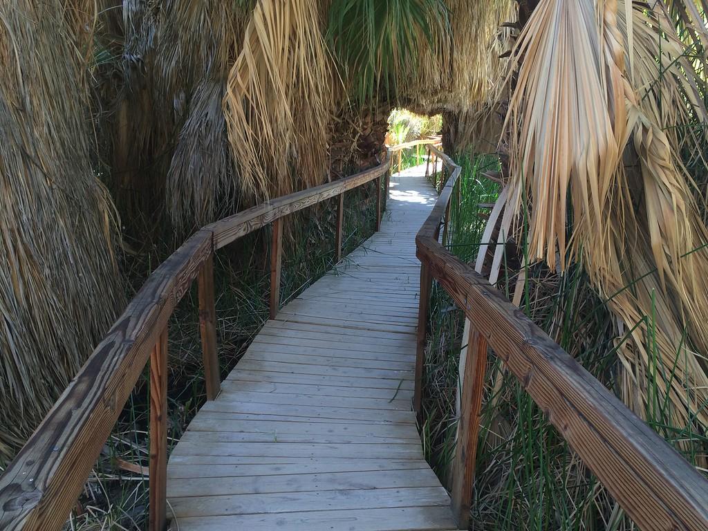 Boardwalk - essential due to mud