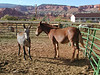 Rim Rock Inn; Torrey, UT.  There was a corral of horses and burros near the motel.