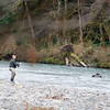 Hoh River Fly Fisherman...