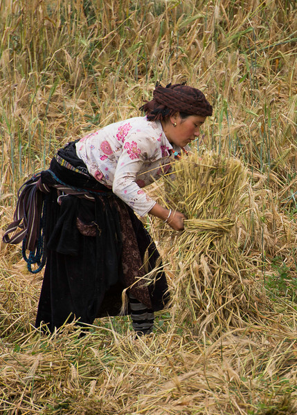 Bailing the barley or tsampa