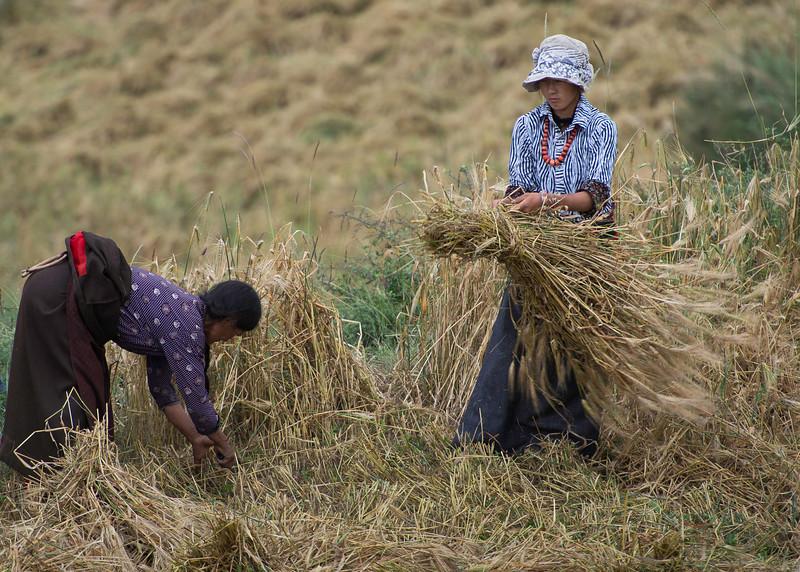 Bailing the barley or tsampa
