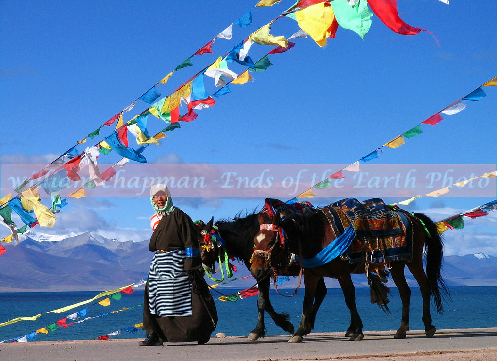 Leading horses to camp- Namtso Lake- Central Tibet