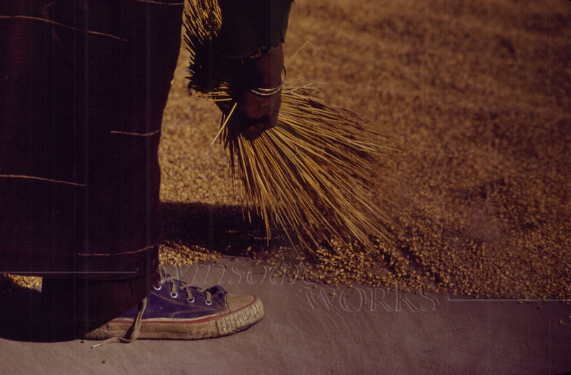 Sweeping up the dried barley grains