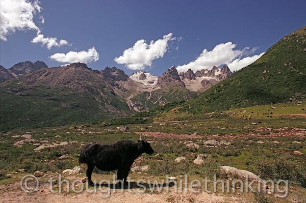 Tibet 2006 Derge to Ganze Aug 8
