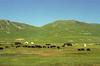 Tibet 2006 Litang to Markham nomad camp Aug 3
