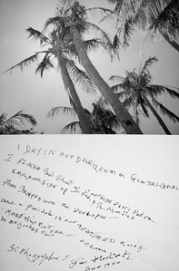 Jim's amazing pinhole camera photo of South Pacific palm trees.  No camera, no film.