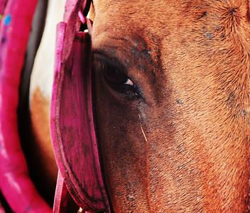 Tough Tears: Carriage horse in Tiradentes