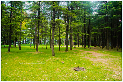 Woods | Chail
