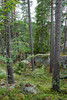 Tiveden-20080810-DSC03351