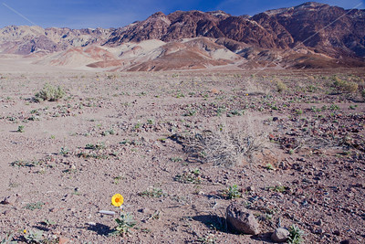 Sign of life in Death Valley