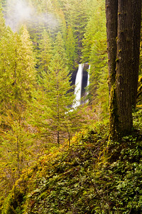 A waterfall seen through the forest-Silver Falls State Park