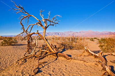 Remains of a tree in the desert