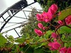 Bougainvillea and waterwheel