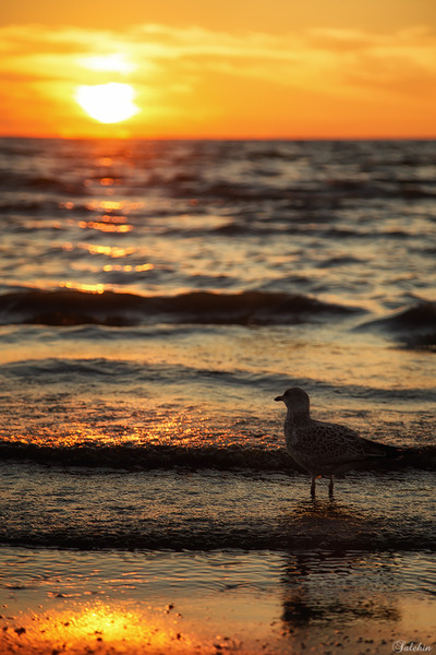 Seagull and the Sun.