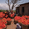 Tomatoes time - on the way to Abomey, Benin