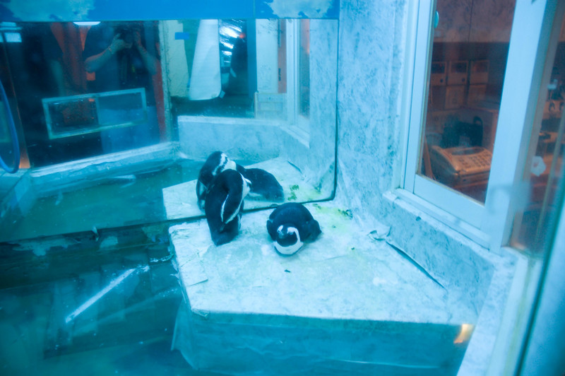 The Penguin Bar in Shinjuku. They just hang out in the freezer there.