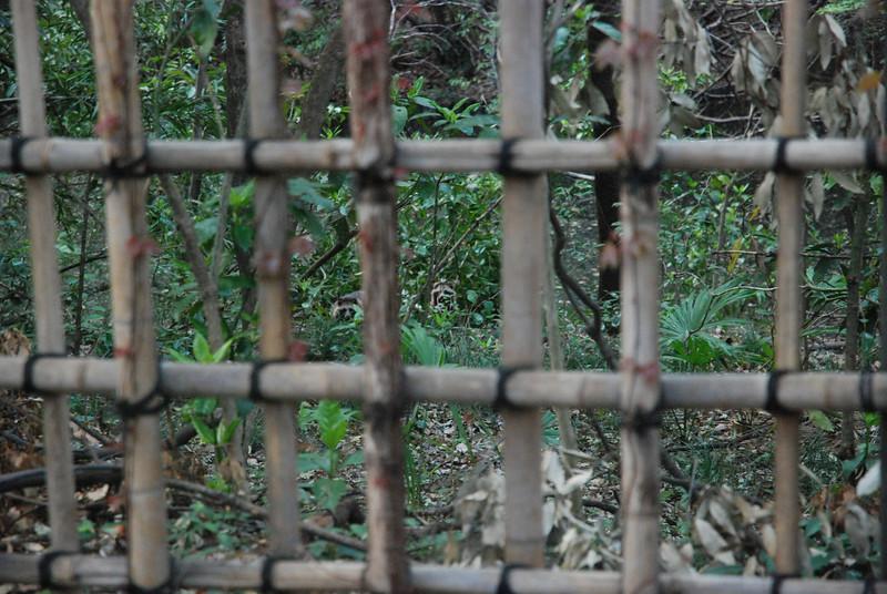 Raccoons at Yoyogi Park