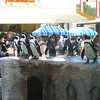 Orderly Penguins