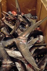 Fresh tuna tails.