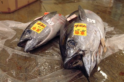 A bunch of fresh tunas.