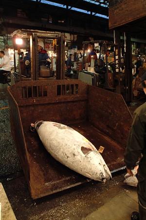 Taking away the sold tunas.