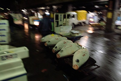 We entered the market and the first load of deep frozen bluefin tuna passed by.