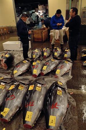 A bunch of fresh tunas.