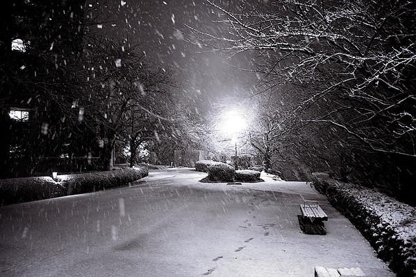 Tokyo First Snow