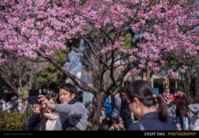Travel Photography by Chiat Hau Photography (Ueno Tokyo : The Cherry Blossom)