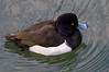 Imperial Palace Duck