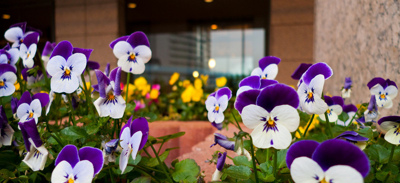 Flowers in front of hotel