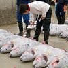 "Inspecting potential purchases at the Tsukiji Fish Market tuna auction - <a href=""http://en.wikipedia.org/wiki/Tsukiji_fish_market"">http://en.wikipedia.org/wiki/Tsukiji_fish_market</a>"