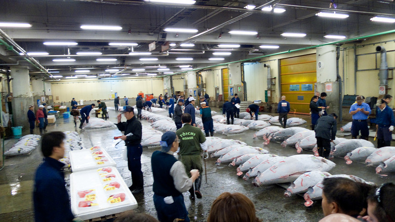 "Sellers and bidders getting ready for the 5:30am tuna auction Tsukiji Fish Market - <a href=""http://en.wikipedia.org/wiki/Tsukiji_fish_market"">http://en.wikipedia.org/wiki/Tsukiji_fish_market</a>"