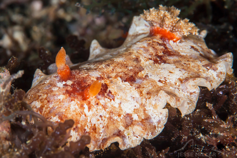 Pulau Dua - Dive #29 of 41