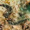 Nemo Rock - Dive #16 of 41