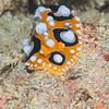 Tanduk - Dive #39 of 41