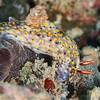 Pulau Dua - Dive #35 of 41