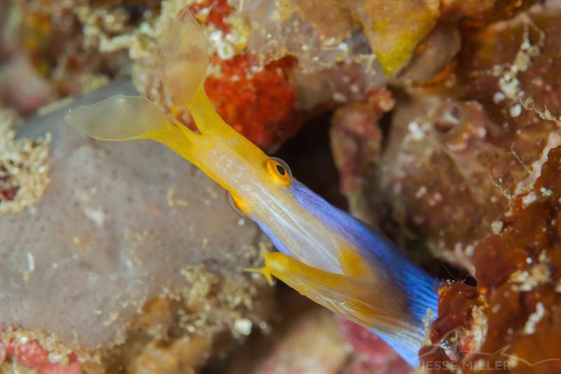 Blue Ribbon Eel - Entre 2 MERS II - Dive #22 of 41