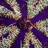 Cake Urchin - Pulau Dua Reef - Dive #25 of 41