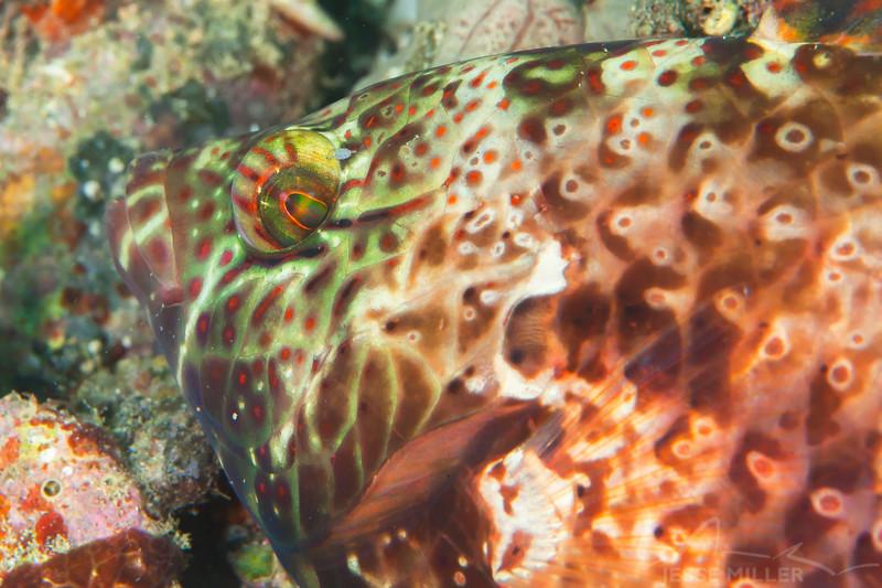Unknown Fish - Pulau Dua Reef - Dive #6 of 41