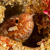 Barred-Fin Moray Eel - Ody's Ridge - Dive #19 of 41