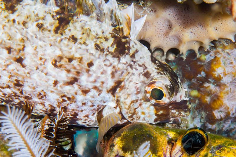 Unknown Fish - Pulau Dua Reef - Dive #25 of 41