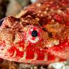 Reptilian Snake Eel - Pulau Dua Reef - Dive #25 of 41