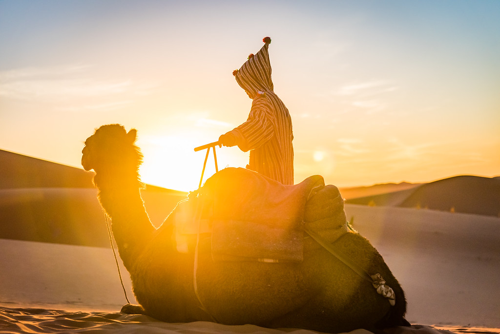 Sunrise Camel Ride
