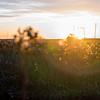 Sunrise through the brush