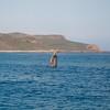 Gray Whale Spy-Hop, Santa Rosa Island, CA
